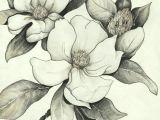 Magnolia Flower Drawing Easy Pin by Daniela Vergara Heidke On Tatuajes Pencil Drawings