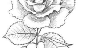 Make Drawing Rose Flowers are You Looking for A Tutorial On How to Draw A Rose Look No