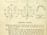 Maple Leaf Easy Drawing Drawing Made Easy A Helpful Book for Young Ar Na