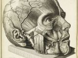 Medical Drawing Of An Eye 16th Century Drawings Of Disease are as Fascinating as they are