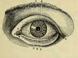 Medical Drawing Of An Eye 236 Best Vintage Medical Illustrations Images Human Anatomy