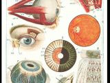 Medical Drawing Of An Eye A Map Of the Anatomy that Maps Our Everyday Life Veins Run Like
