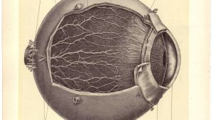 Medical Drawing Of An Eye Old Medical Illustration Pen Paper Medical Illustration