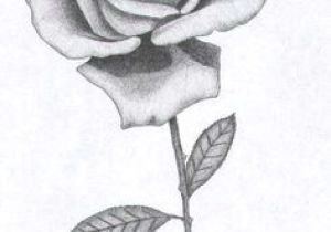 Nice Drawings Of Roses 41 Best Black and White Roses Images Pencil Drawings Paintings
