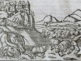 Oldest Drawings Of Dragons Wawel Dragon Wikipedia