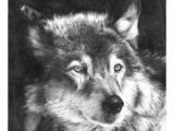 Pencil Drawing Of A Wolf 109 Best Wolf Images Wolf Drawings Art Drawings Draw Animals