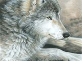 Pencil Drawing Of A Wolf Colored Pencil Drawing Of A Wolf This is Magnificent Ink