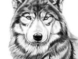 Pencil Drawing Of A Wolf Gray Wolf by Dave the Drawing Guy Love My Wolves Pinterest