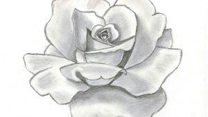 Pencil Drawing Of Flower Garden 61 Best Art Pencil Drawings Of Flowers Images Pencil Drawings