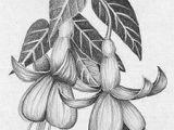 Pencil Drawings Of Flowers and Vines 61 Best Art Pencil Drawings Of Flowers Images Pencil Drawings