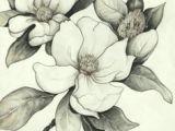 Pencil Drawings Of Magnolia Flowers 191 Best Flower Sketch Images Drawing Flowers Flower Designs