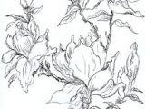 Pencil Drawings Of Magnolia Flowers 72 Best Flowering Magnolia Tree Stencil Images Magnolia Trees