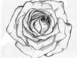 Pic Of A Drawing Of A Rose Rose Sketch Ahmet A Am Illustrator Drawings Rose Sketch Sketches
