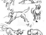Pictures Of A Drawing Of A Wolf 61 Best Wolf Images Wolves Drawing Ideas Drawings