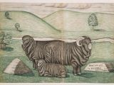 Ram Animal Drawing Folk Art Various Ram Ewe and Lamb In foreground Of