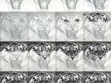 Realistic Animal Drawings Easy Easy Realistic Tiger Drawings Tigers Drawing and Painting