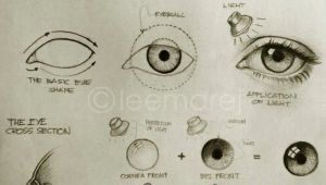 Realistic Drawing Of A Wolf Eye Eye Study How to Draw Realistic Eyes Thank You Olivia Garca A
