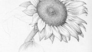 Realistic Pencil Drawings Of Flowers 61 Best Art Pencil Drawings Of Flowers Images Pencil Drawings