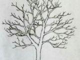 Redwood Tree Drawing Easy 1394 Best Pencil Tree Sketching Methods Images Pencil