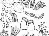 Seaweed Drawing Easy 51 Best Coral Reef Drawing Images Coral Reef Drawing