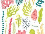 Seaweed Drawing Easy Sea Plants and Aquatic Marine Algae Seaweed Set Vector