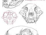 Side Drawing Of A Cat Cat Skull Anatomy Google Search Cat Tattoo Final Drawi