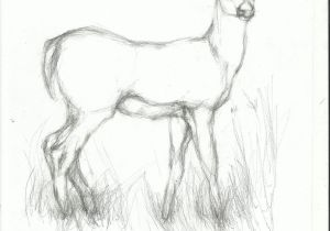 Simple Easy Pencil Drawings Pencil Easy Animal Sketch Drawing Animal Sketches