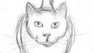 Sketch Drawing Of A Cat Easy Cat Drawings In Pencil Wallpapers Gallery Art and