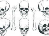 Skull Drawing Angles Fotografija Hand Drawn Realistic Human Skulls and Bones From