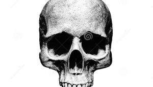 Skull Drawing Black Background Skull Illustration isolated In White Background Stock Illustration