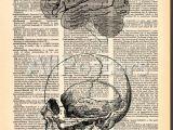 Skull Drawing Brain Skull Brain Prints by Book Dictionary Art at Allposters Com