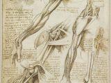 Skull Drawing Da Vinci A Rare Glimpse Of Leonardo Da Vinci S Anatomical Drawings Art Da