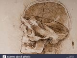 Skull Drawing Da Vinci Anatomical Studies Human Skull Leonardo Stock Photos Anatomical