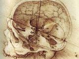 Skull Drawing Da Vinci Da Vinci Art Inspiration Pinterest Leonardo Da Vinci Da