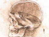 Skull Drawing Da Vinci File View Of A Skull Ii Jpg Wikimedia Commons