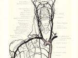 Skull Drawing Diagram 1899 Human Anatomy Print Circulation Carotid Arteries Vintage