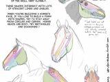Skull Drawing Diagram Drawing Art Draw Animal Skeleton Anatomy Horse Reference Tutorial