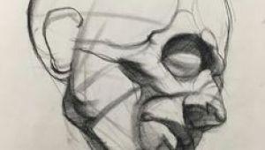 Skull Drawing Figure 175 Best Realistic Refs Images Anatomy Drawing Figure Drawing