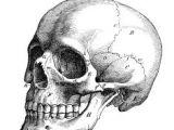 Skull Drawing From the Side Skull Sketch Tattoo Skull Sketch Drawings Skull Art