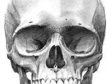 Skull Drawing Front 213 Best Skull Sketch Images Skull Skulls Skull Tattoos