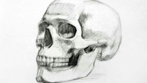 Skull Drawing Front View Skull Drawing Art Drawings Skull Sketch Art