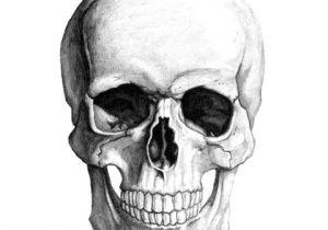 Skull Drawing Hd Human Skull Skulls Pinterest Skull Illustration Skull and