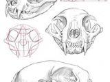 Skull Drawing Labeled 122 Best Skull Anatomy Images In 2019 Skull Anatomy Skeletons Skull