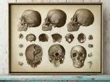 Skull Drawing Printable Anatomy Print Skull Print Head Print Cranium Anatomical Drawing