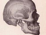 Skull Drawing Side Skull Side View Halloween Skull Skull Side View Drawings