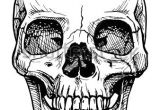 Skull Drawing Side Vector Black and White Illustration Of Human Skull with A Lower Jaw