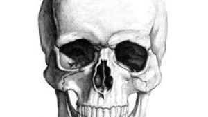Skull Drawing with Bones Die 60 Besten Bilder Von Skulls Skull Skull Art Und Bones