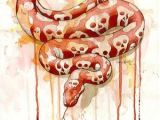 Skull Drawing with Snake Skull Python Snakes Pinterest Snake Art Snake Drawing and Art
