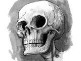 Skulls Drawing In Pencil Cute Skull Illustration Skulls In 2019 Skull Sketch Drawings