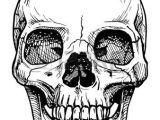 Skulls Drawing In Pencil Skull Drawing Vector Black and White Illustration Of Human Skull